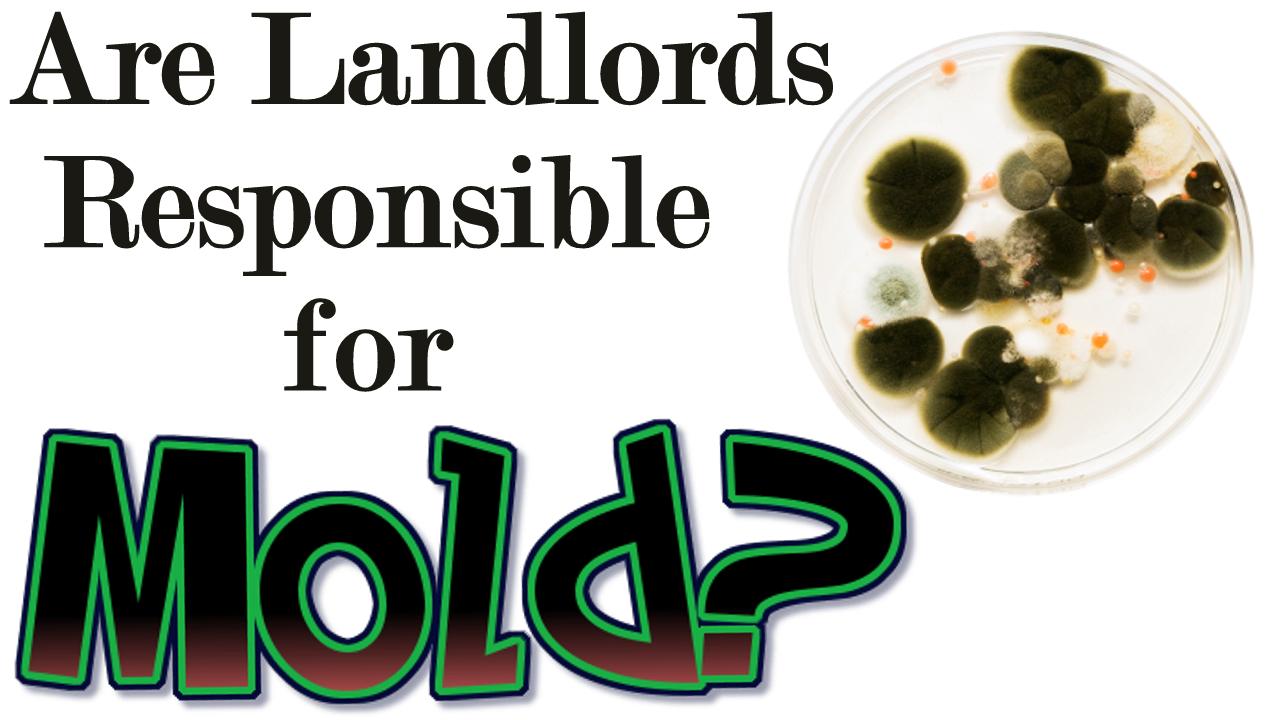 Rental Property Mold